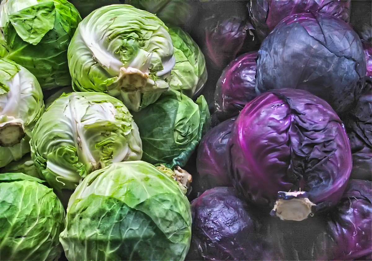 Cabbage The Health Benefits Of Red And Green Cabbage
